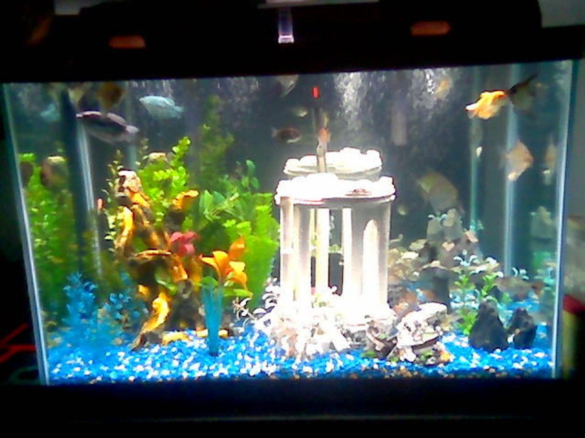 75 gallons freshwater fish tank (mostly fish and non-living decorations) - 65g fresh