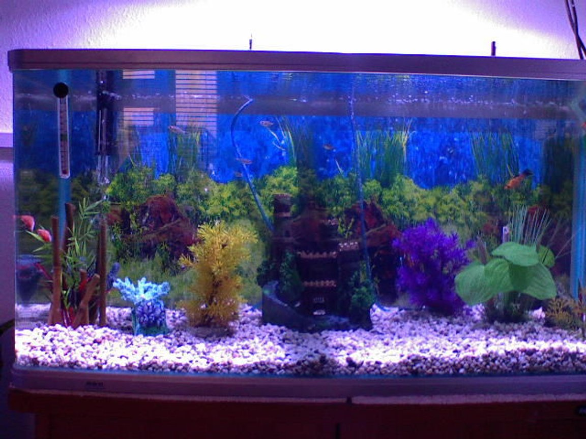38 gallons freshwater fish tank (mostly fish and non-living decorations) - MYTANK