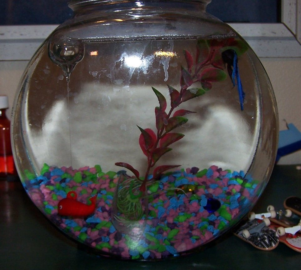 1 gallon freshwater fish tank (mostly fish and non-living decorations) - a male betta