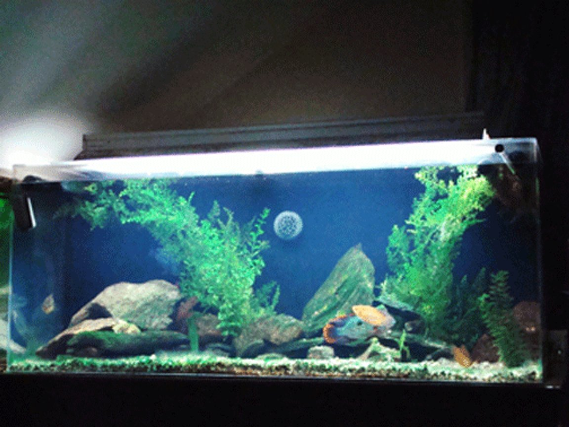 110 gallons freshwater fish tank (mostly fish and non-living decorations) - 110 gallon