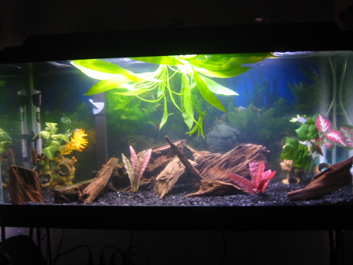 30 gallons freshwater fish tank (mostly fish and non-living decorations) - front view