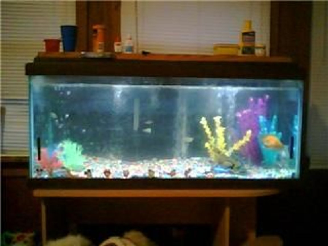 29 gallons freshwater fish tank (mostly fish and non-living decorations) - my very first tank..it was 70 gals...i sold it when i left for the army.