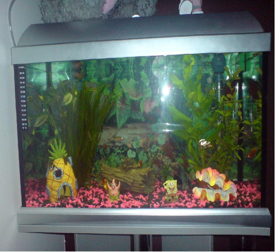 12 gallons freshwater fish tank (mostly fish and non-living decorations) - My Fish Tank!