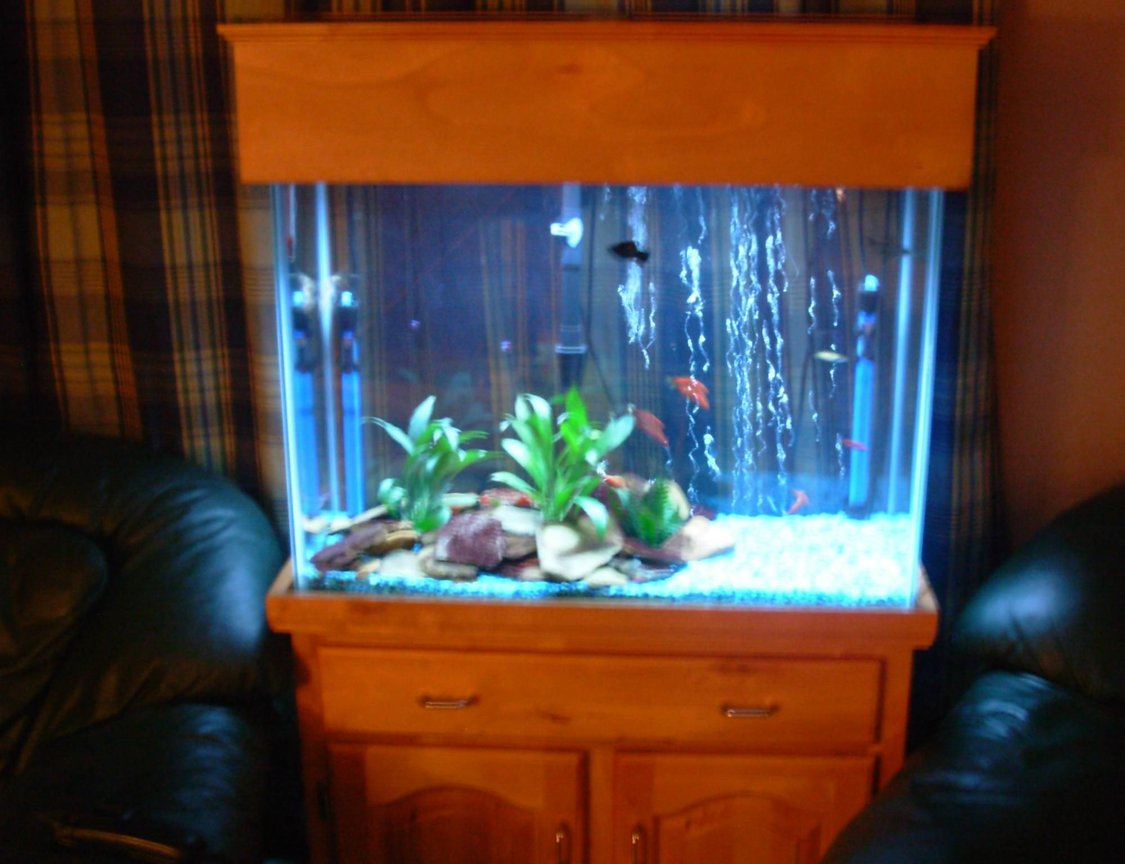 33 gallons freshwater fish tank (mostly fish and non-living decorations) - away shot of tank