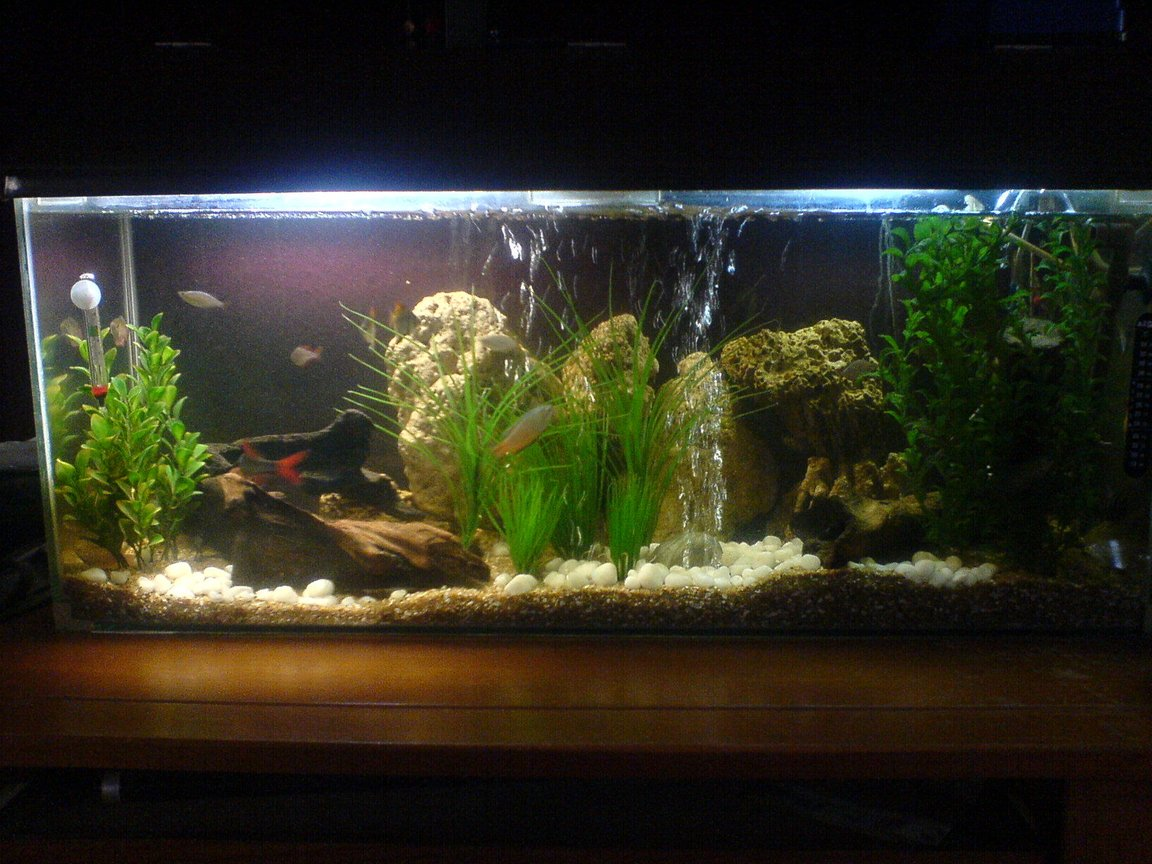 130 gallons freshwater fish tank (mostly fish and non-living decorations) - difft angle