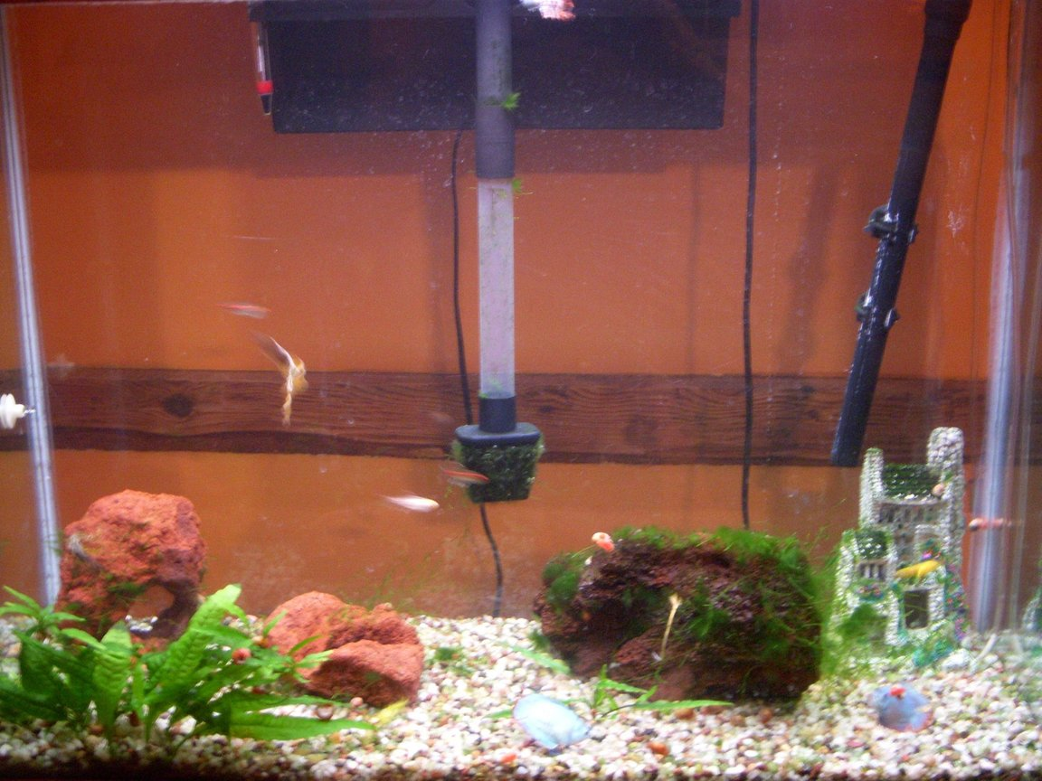 45 gallons freshwater fish tank (mostly fish and non-living decorations) - carlos's tank