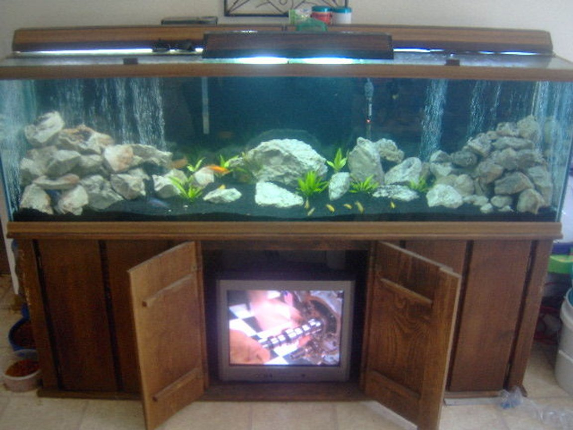 125 gallons freshwater fish tank (mostly fish and non-living decorations) - Malawi Tank