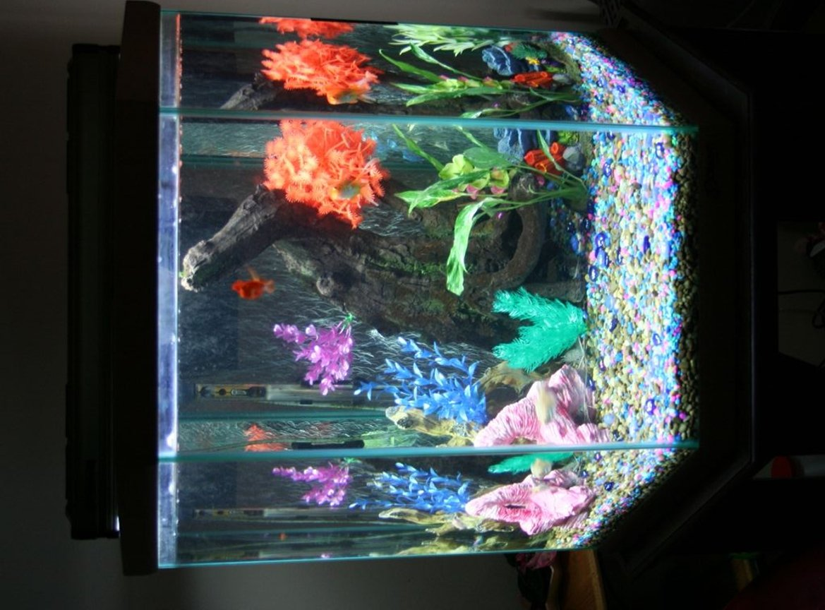 43 gallons freshwater fish tank (mostly fish and non-living decorations) - Front view of 43 GL tank. Sweetheart Parrot in the front. As always