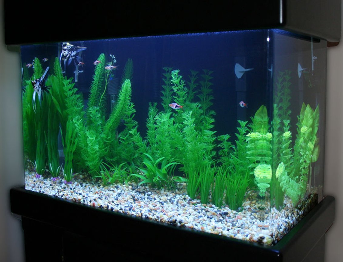 20 gallons freshwater fish tank (mostly fish and non-living decorations) - Marbled Angelfish Tank