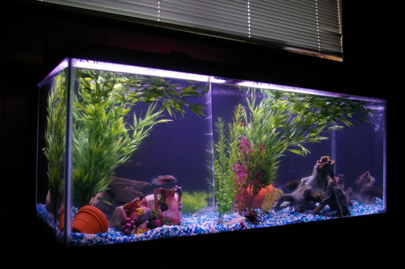 75 gallons freshwater fish tank (mostly fish and non-living decorations) - 75 gallon freshwater cichlid tank