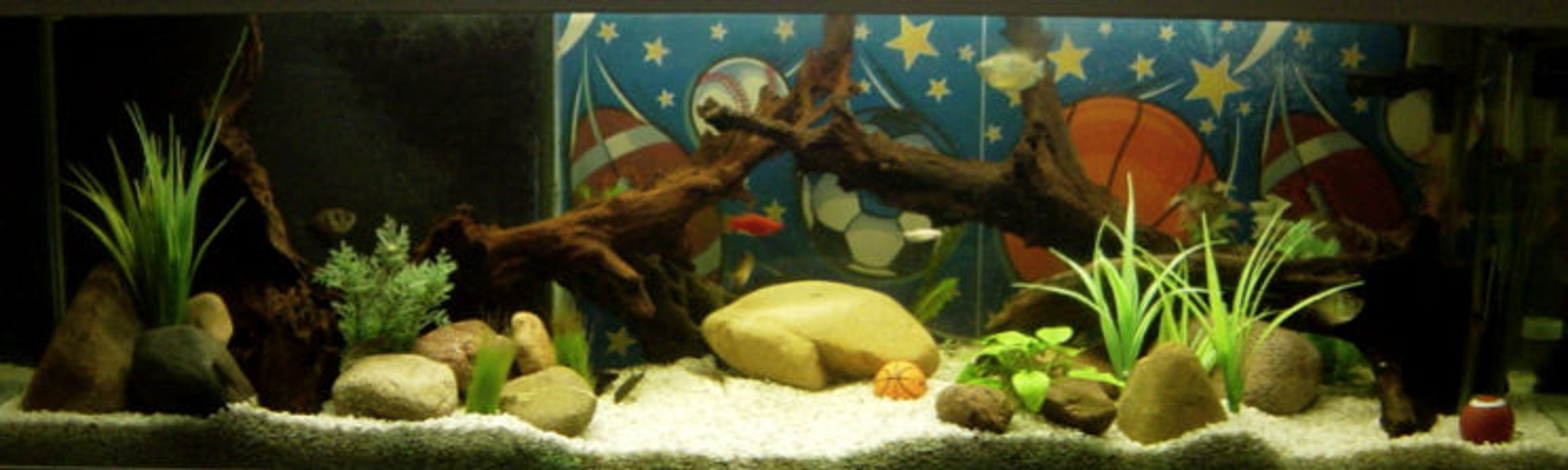34 gallons freshwater fish tank (mostly fish and non-living decorations) - 34 GAL freshwater sports theme tank. It is placed in an office decorated with all sort of sporting goods.