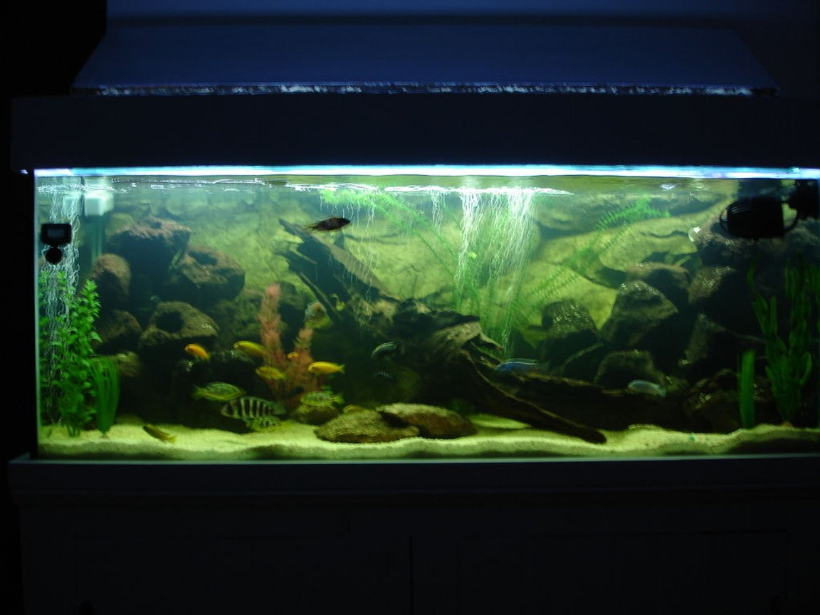 65 gallons freshwater fish tank (mostly fish and non-living decorations) - Full Shot of the Tank