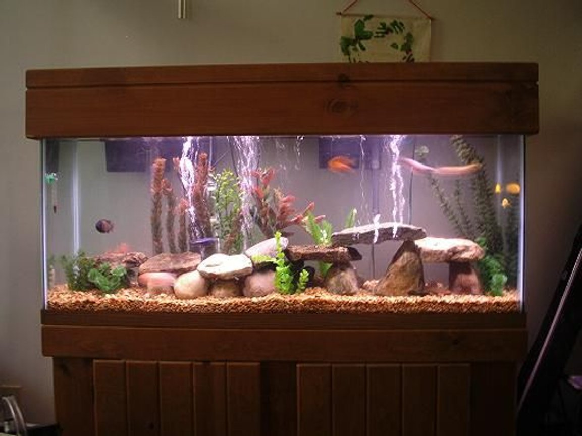 55 gallons freshwater fish tank (mostly fish and non-living decorations) - my 55