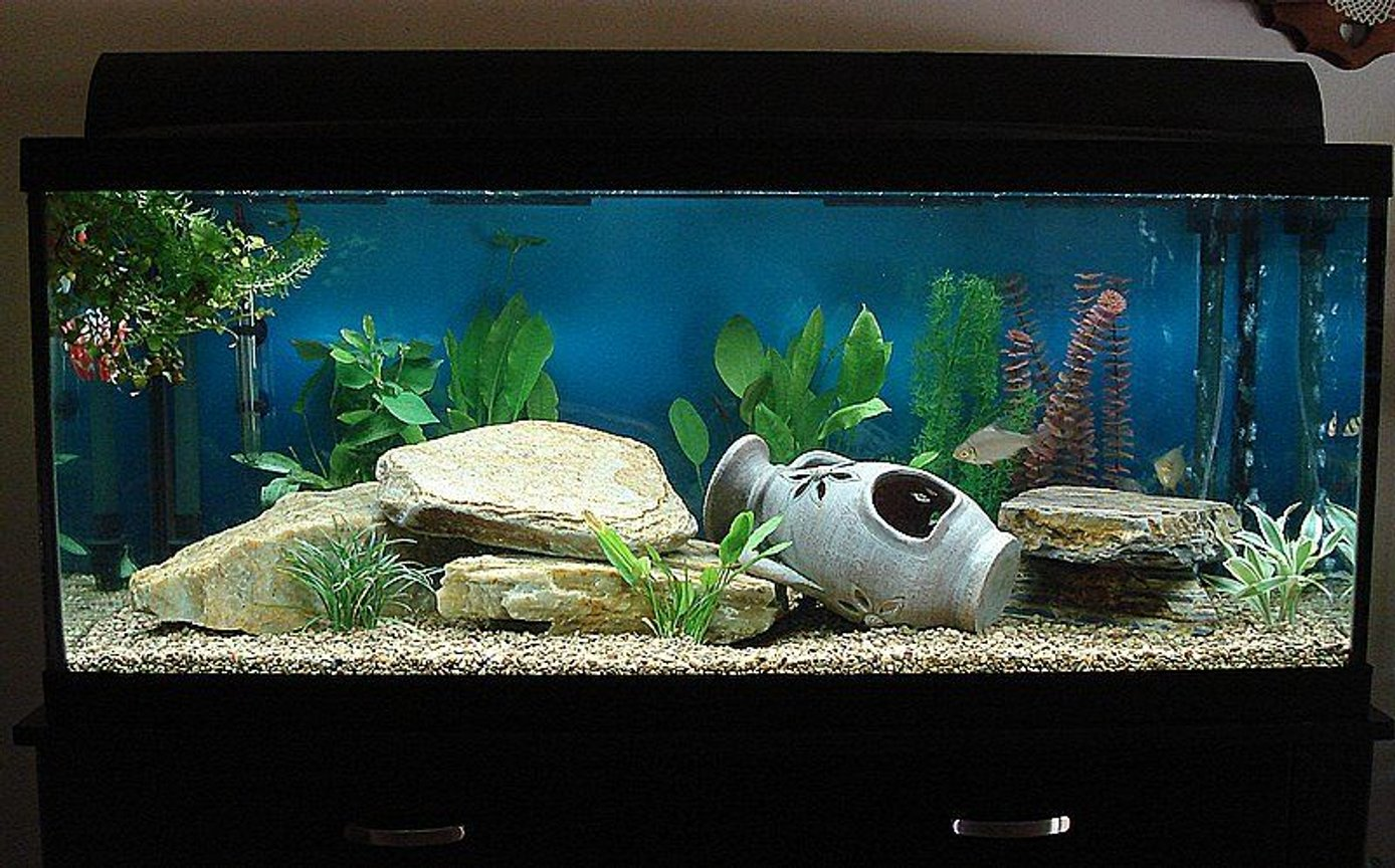 "75 gallons freshwater fish tank (mostly fish and non-living decorations) - 75 gallon ""fresh"" open water tank..."