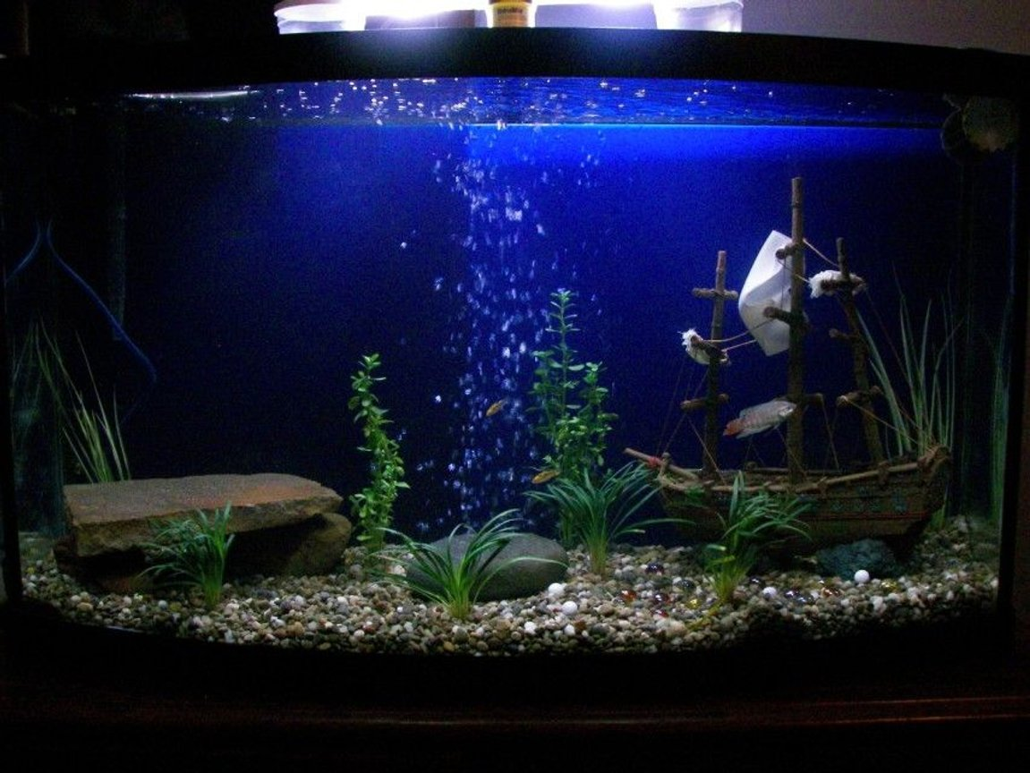 46 gallons freshwater fish tank (mostly fish and non-living decorations) - My new 46gal Bow with a pirate theme.