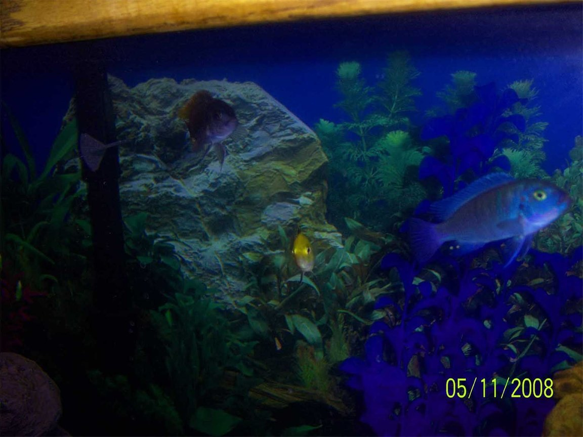 55 gallons freshwater fish tank (mostly fish and non-living decorations) - a new pic, fish up close and personal