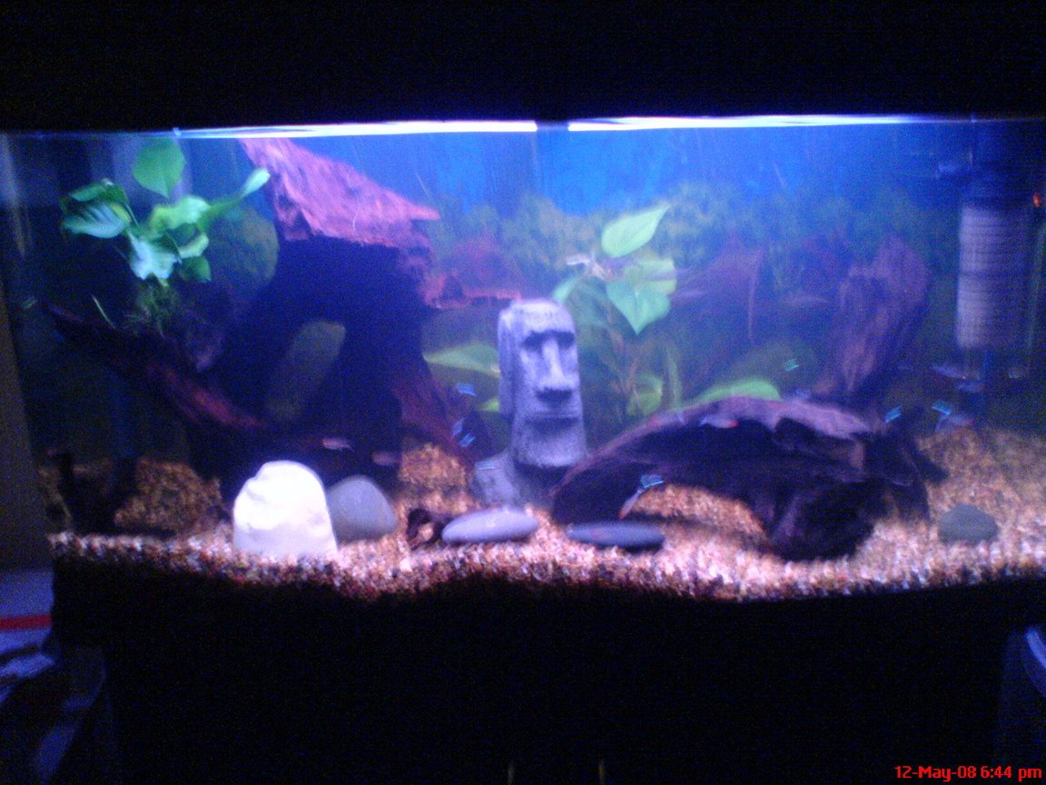50 gallons freshwater fish tank (mostly fish and non-living decorations) - My 200L Amazon fish tank