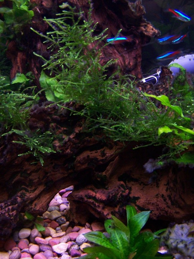 30 gallons freshwater fish tank (mostly fish and non-living decorations) - Planted tank