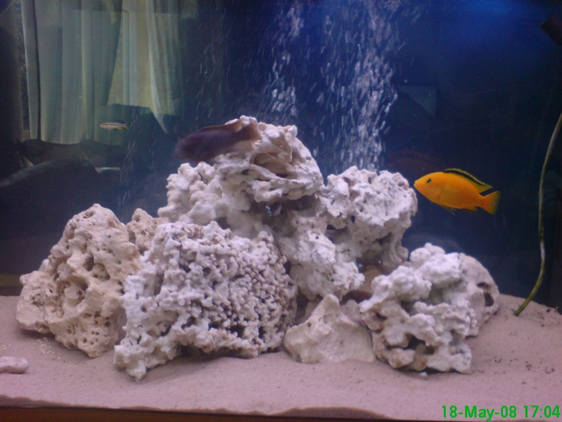 280 gallons freshwater fish tank (mostly fish and non-living decorations) - chiclid tank