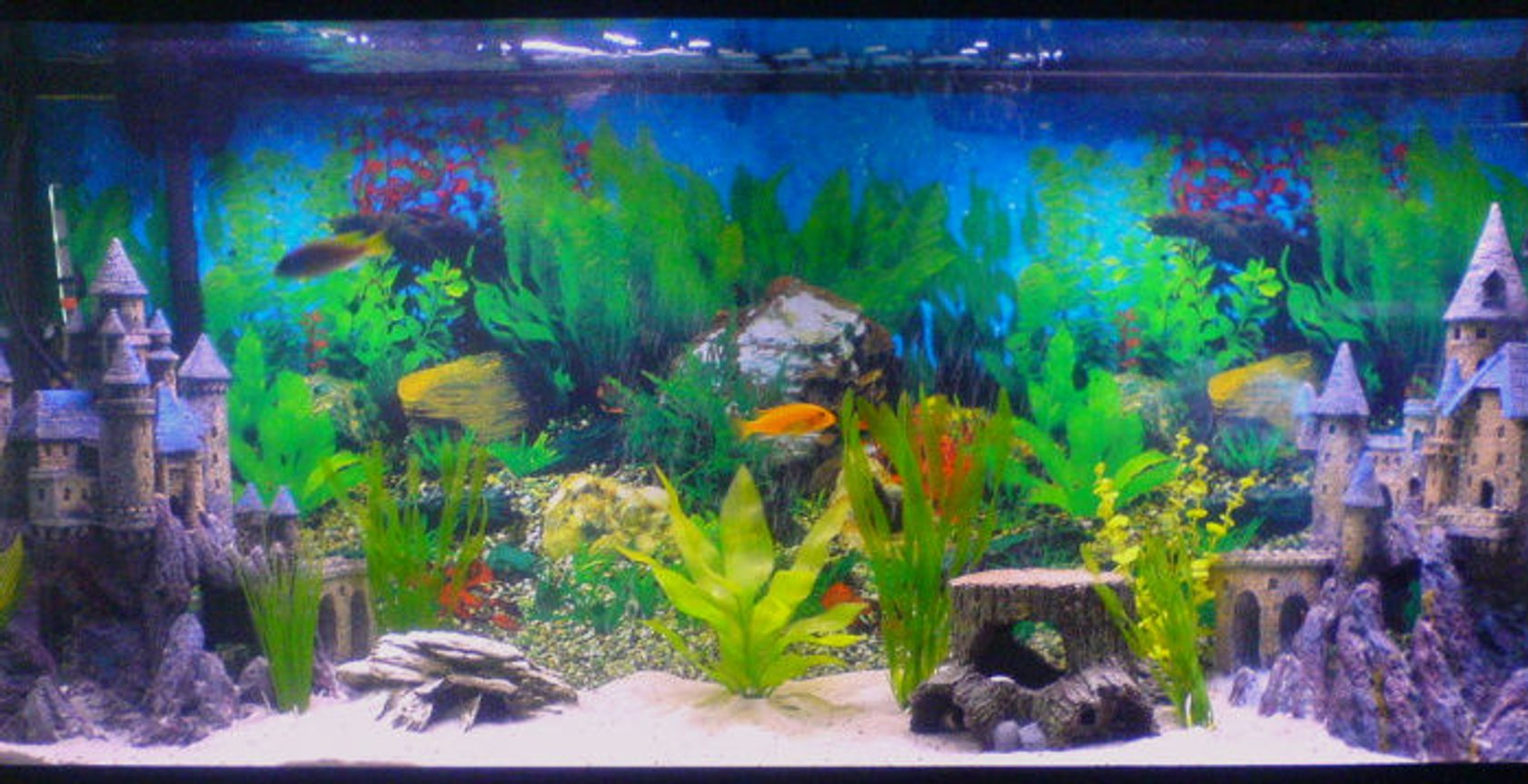 55 gallons freshwater fish tank (mostly fish and non-living decorations) - My First tank Ever Trials and Errors