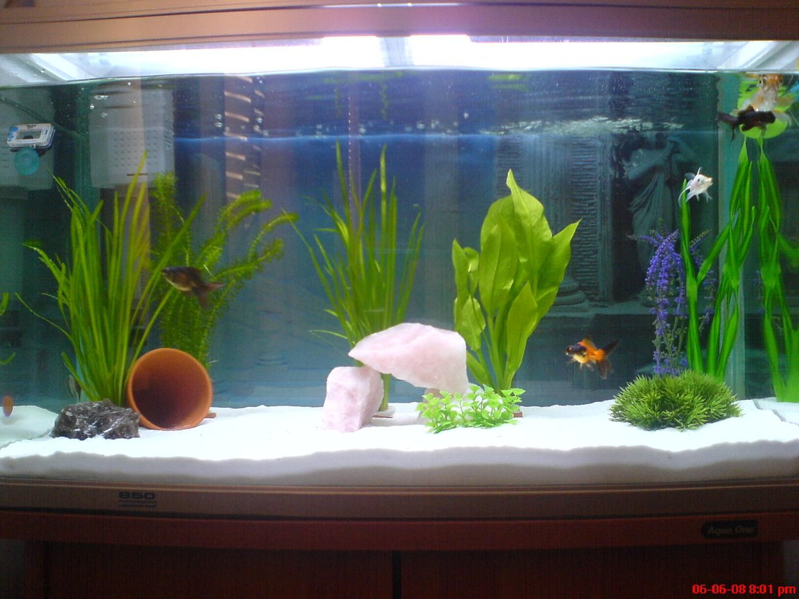 32 gallons freshwater fish tank (mostly fish and non-living decorations) - up 2 date pic of my tank