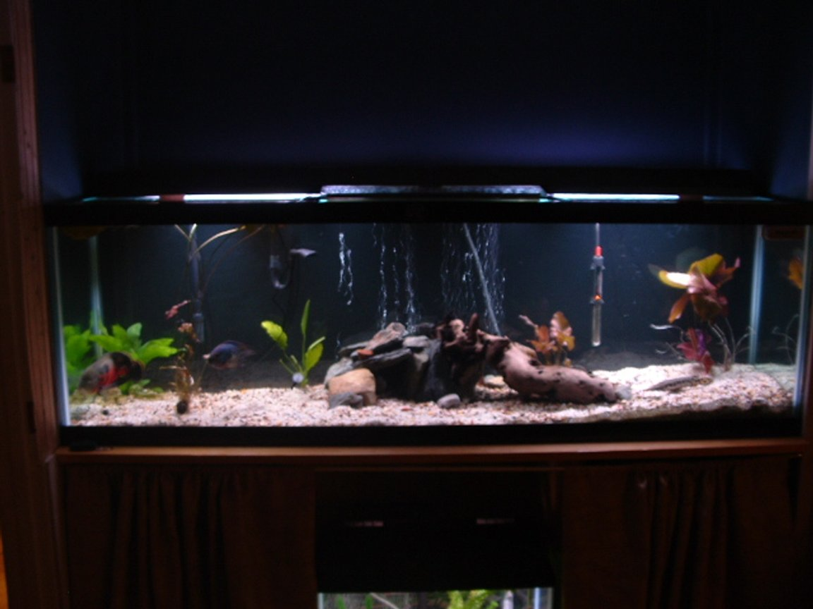 125 gallons freshwater fish tank (mostly fish and non-living decorations) - My 125