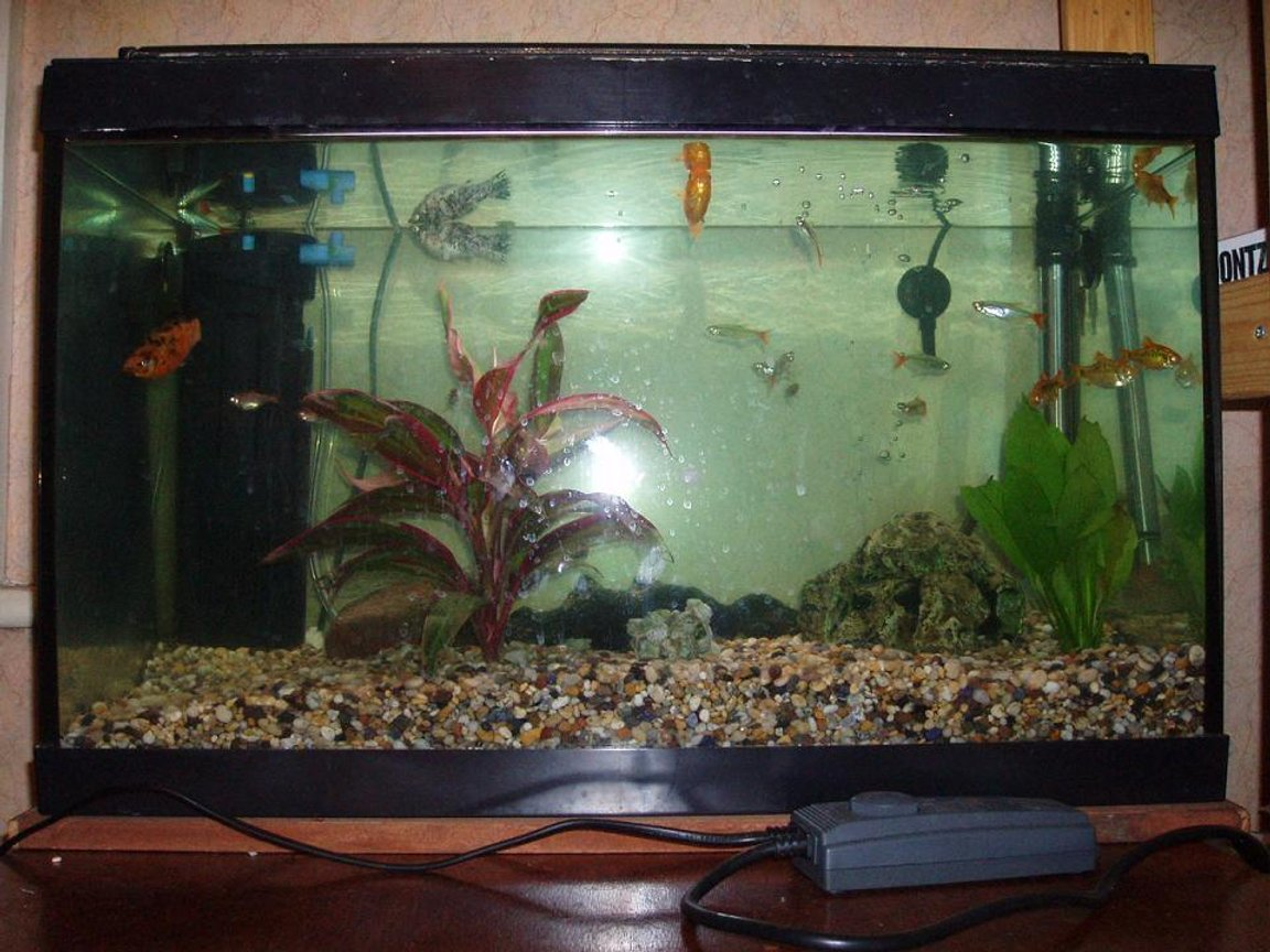 12 gallons freshwater fish tank (mostly fish and non-living decorations) - My first tank - These fish were rescued from a friend who's tank burst. Before I took them home they were lodging in his bathroom washbasin!