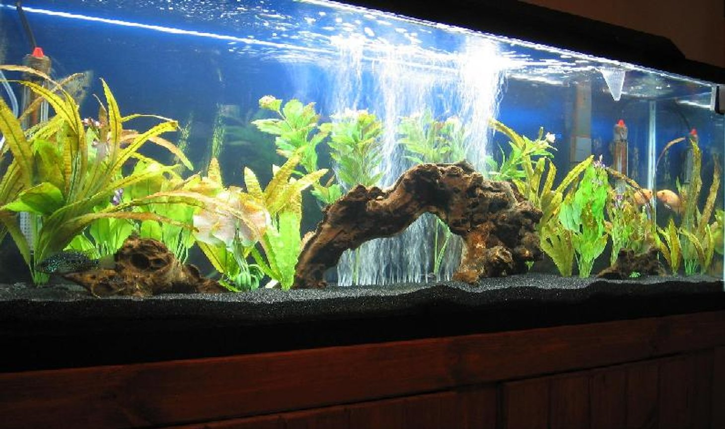 55 gallons freshwater fish tank (mostly fish and non-living decorations) - 55 gallon Freshwater NW Chiclid