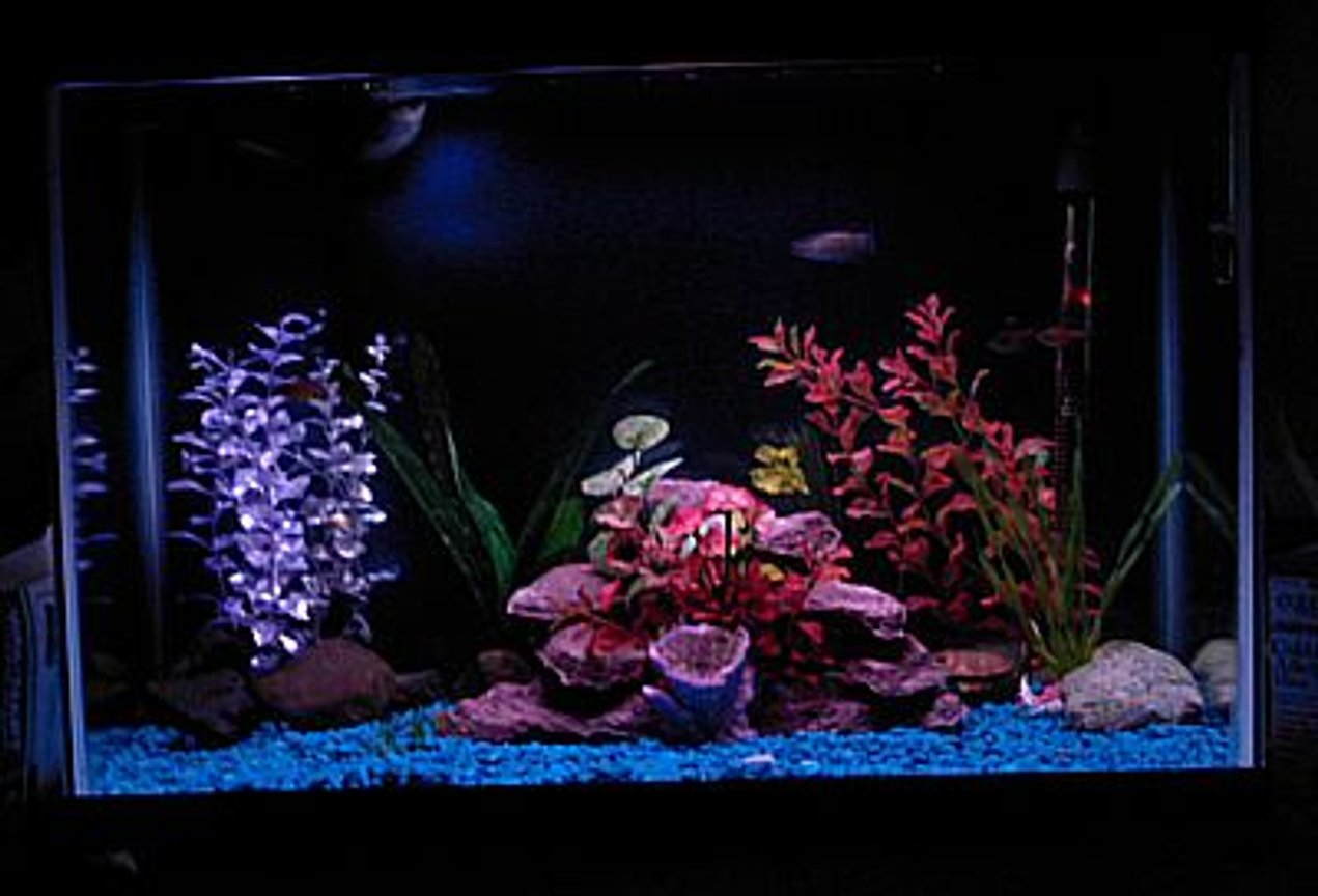 55 gallons freshwater fish tank (mostly fish and non-living decorations) - Von Rio Tetras and 1 three spot gourami.