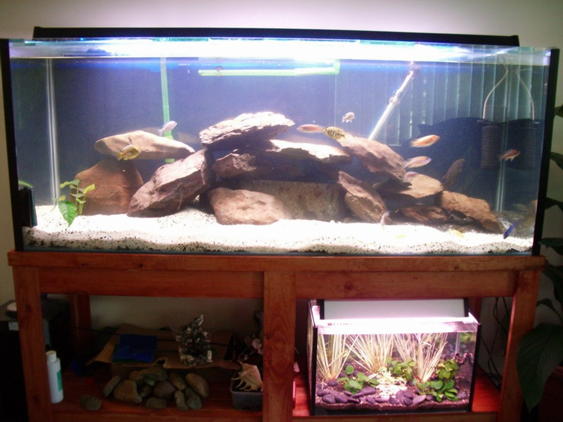 95 gallons freshwater fish tank (mostly fish and non-living decorations) - Small neon tetra tank below