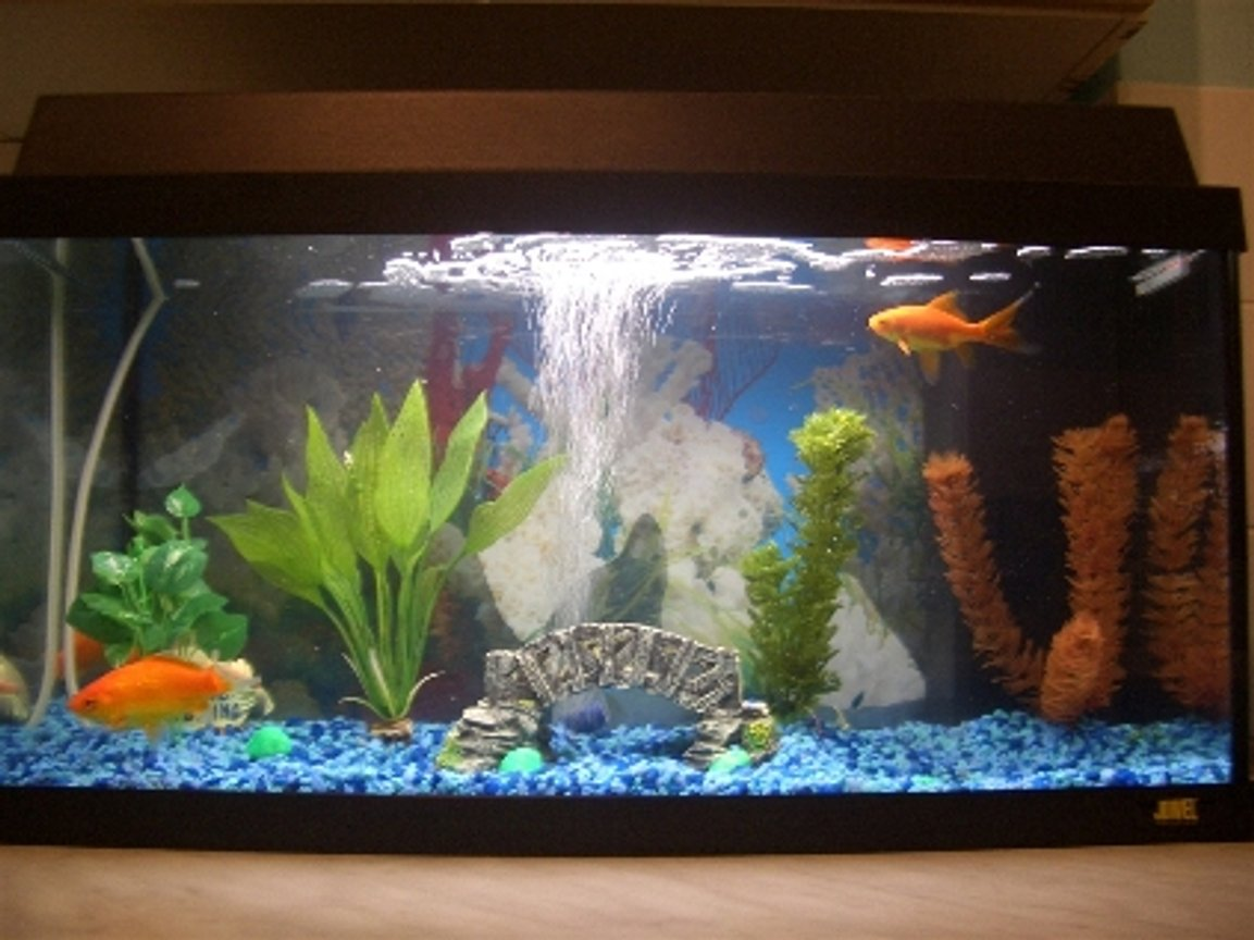 60 gallons freshwater fish tank (mostly fish and non-living decorations) - 60 rekord my Juwel tank the best tank around i think and cheap cost's only around £95 the best thing is it came with a heater so if i do get bored of cold water fish i can just put the heater and get tropical fish