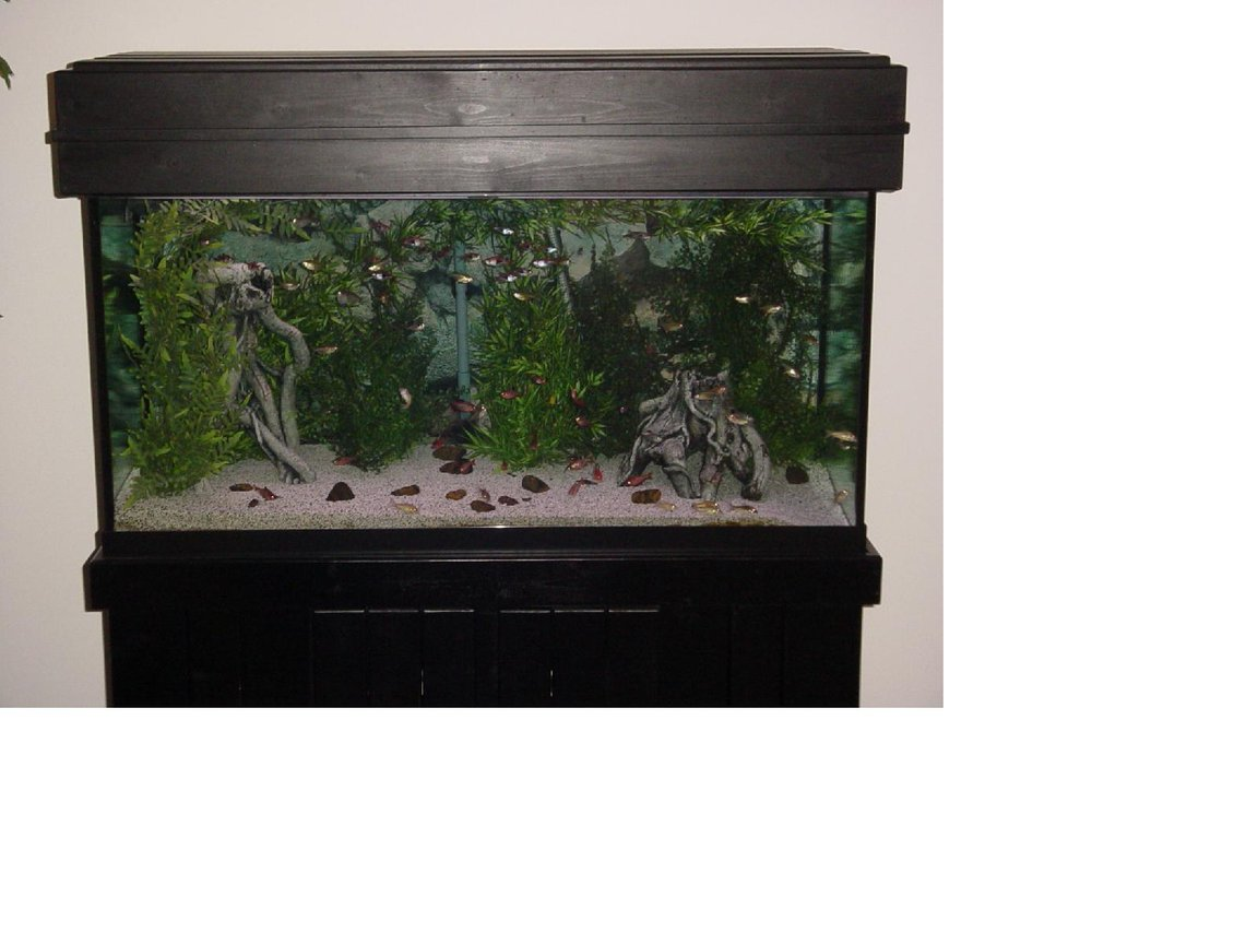 90 gallons freshwater fish tank (mostly fish and non-living decorations) - Here is My 90 Gallon Tera Tank with Plastic Pants, Ceramic Roots, White Chiclid Sand