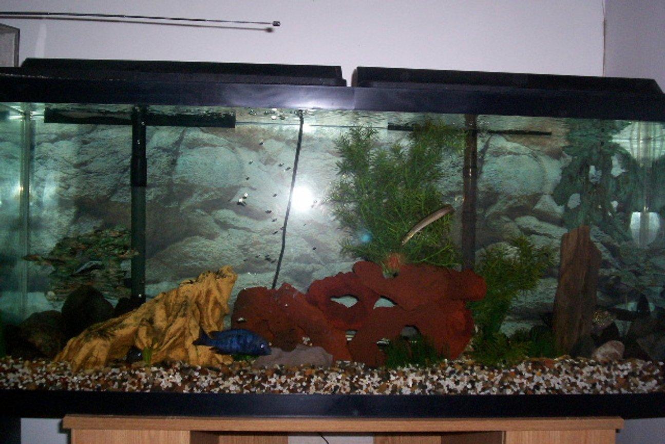 55 gallons freshwater fish tank (mostly fish and non-living decorations) - my new setup