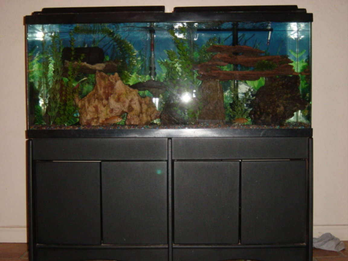 55 gallons freshwater fish tank (mostly fish and non-living decorations) - tf