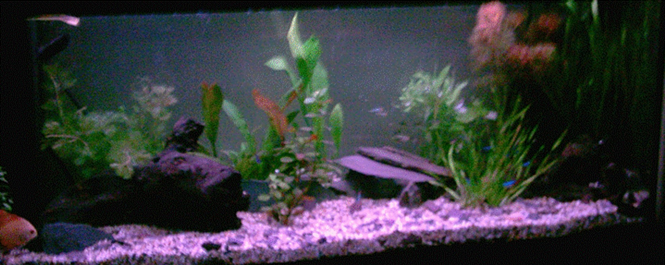 120 gallons freshwater fish tank (mostly fish and non-living decorations) - My discus tank Discus come first not plants.