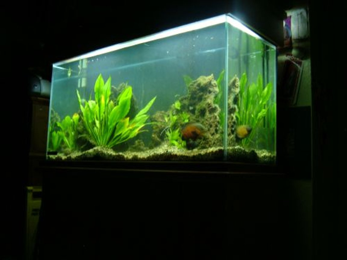 80 gallons freshwater fish tank (mostly fish and non-living decorations) - 80 Gallon Tank