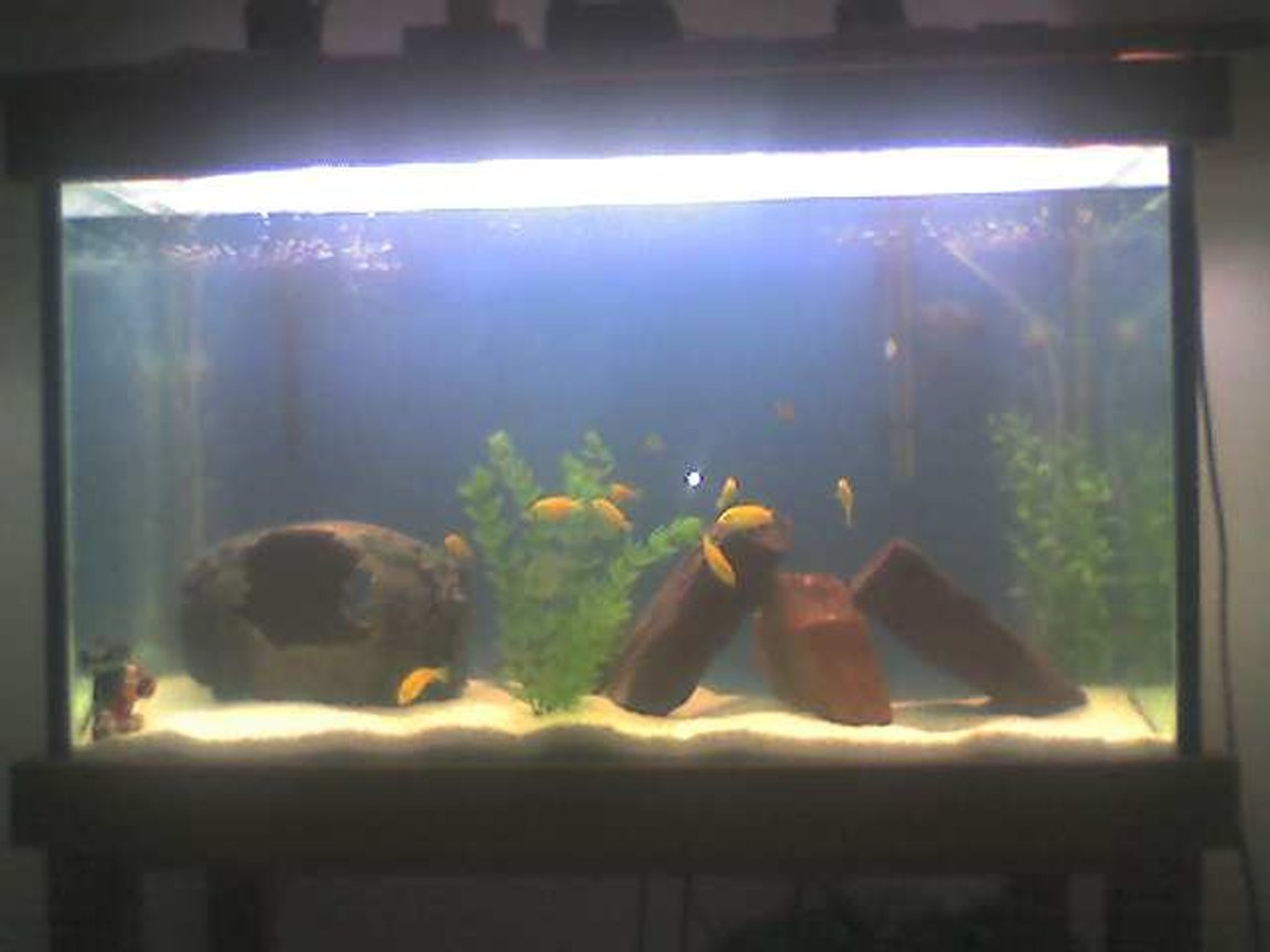 37 gallons freshwater fish tank (mostly fish and non-living decorations) - my tank
