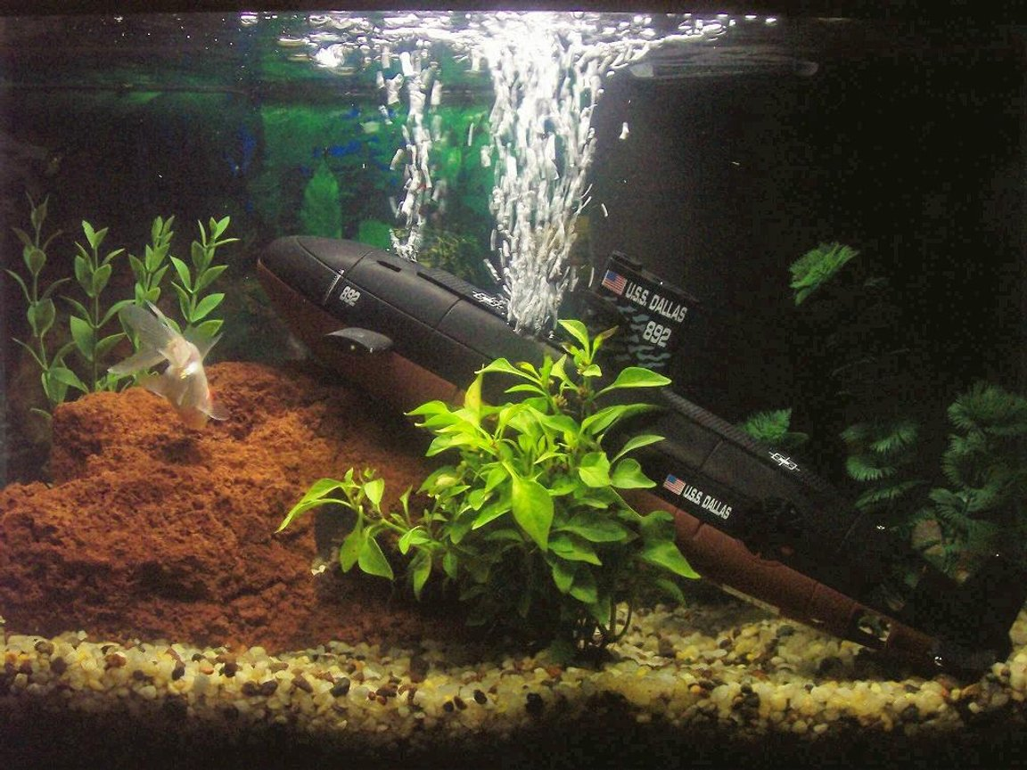 10 gallons freshwater fish tank (mostly fish and non-living decorations) - My Tank