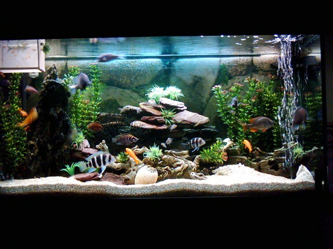 90 gallons freshwater fish tank (mostly fish and non-living decorations) - FRESHWATER2