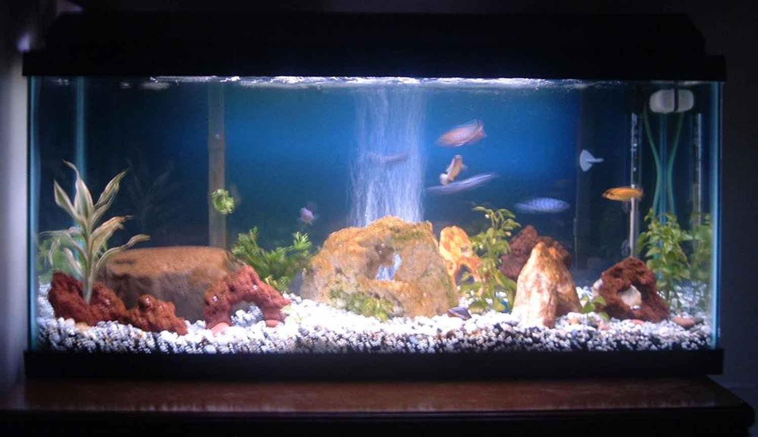 30 gallons freshwater fish tank (mostly fish and non-living decorations) - 30g Mbuna tank