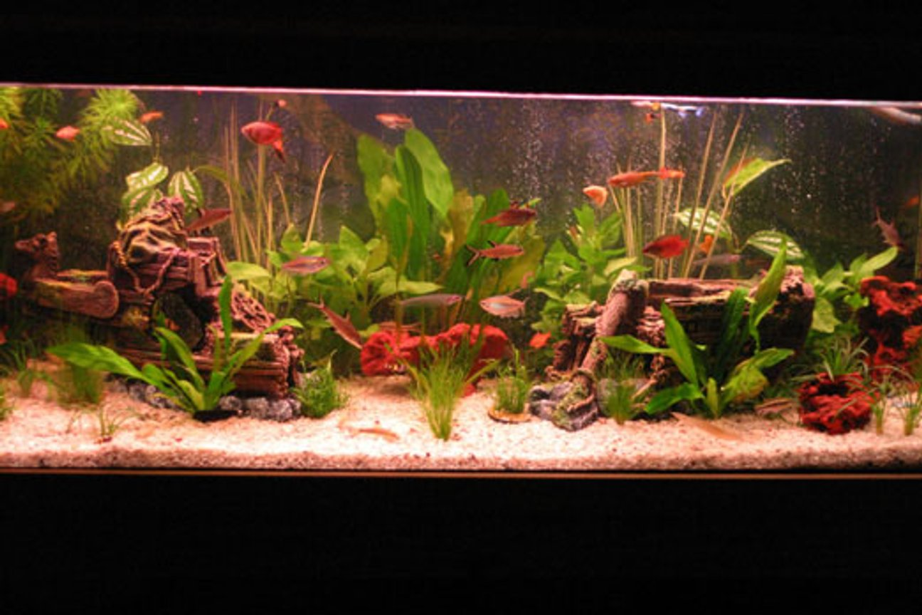 45 gallons freshwater fish tank (mostly fish and non-living decorations) - 4 mth old