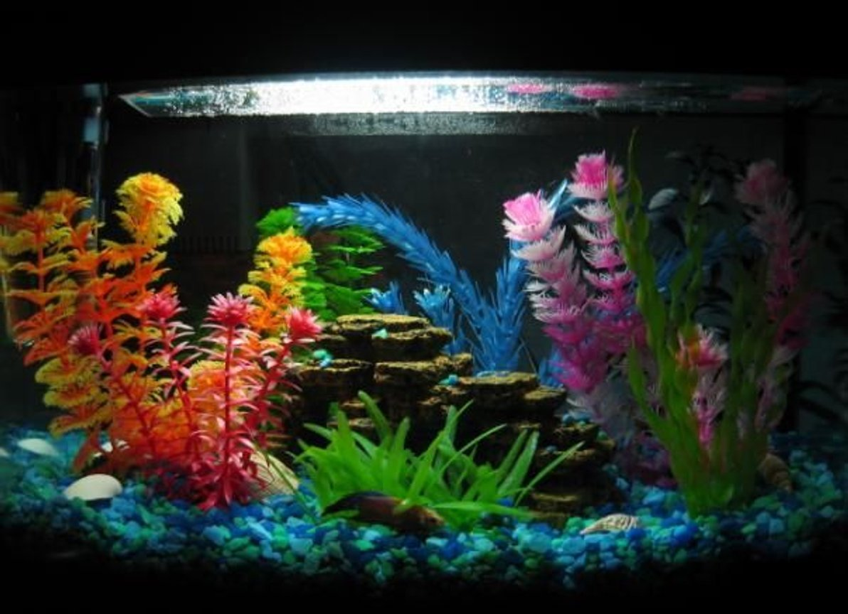 6 gallons freshwater fish tank (mostly fish and non-living decorations) - 6 gallon