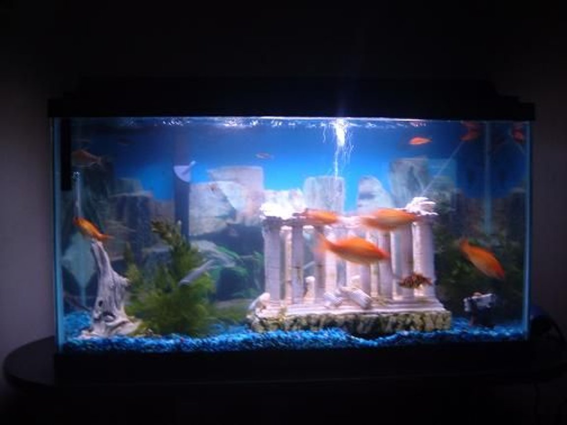 40 gallons freshwater fish tank (mostly fish and non-living decorations) - Another Angle
