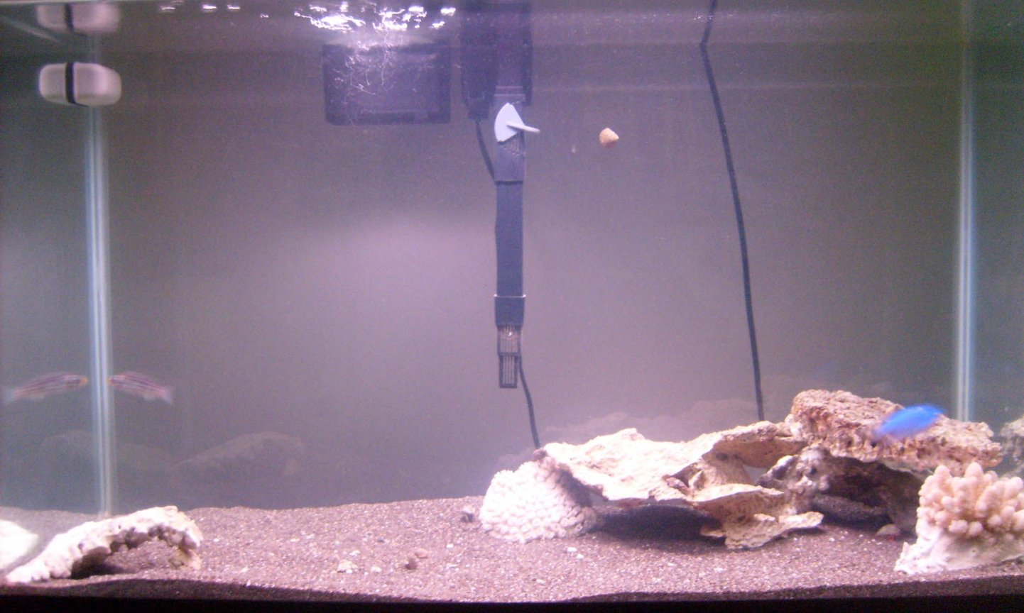 10 gallons freshwater fish tank (mostly fish and non-living decorations) - new 30G transferred from a 10G