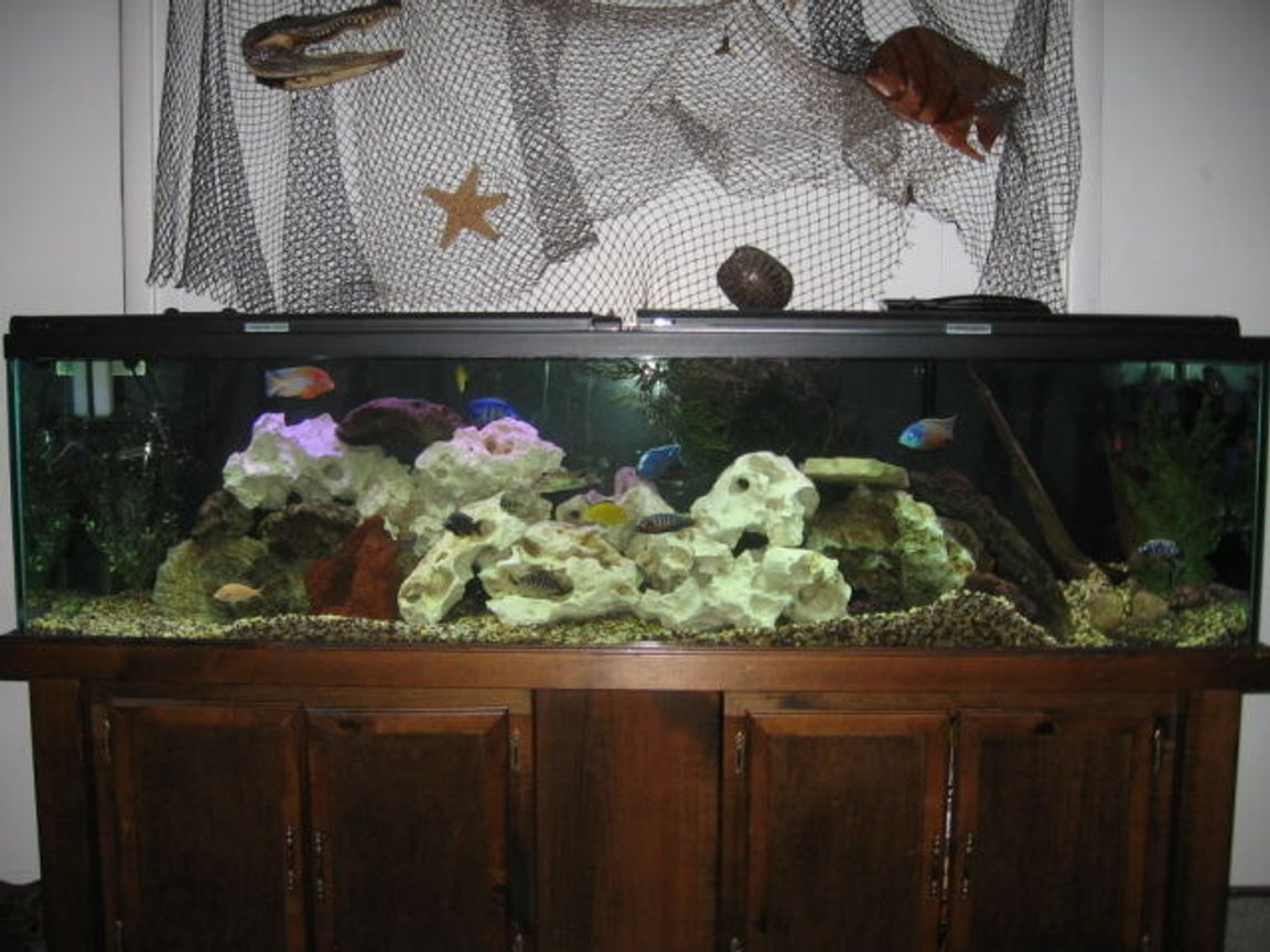 125 gallons freshwater fish tank (mostly fish and non-living decorations) - 125 Gal. Mixed Aftrican Tank