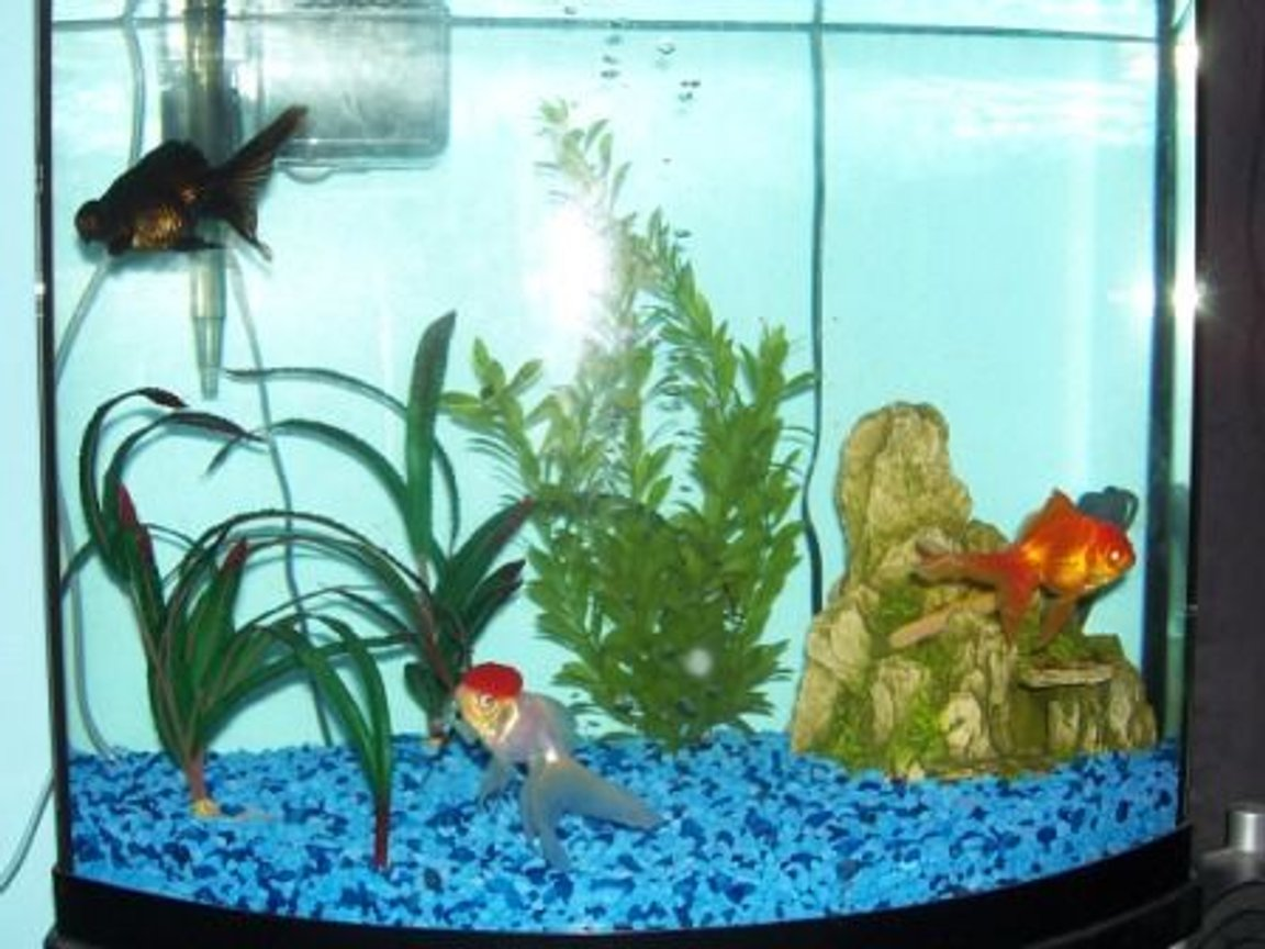 27 gallons freshwater fish tank (mostly fish and non-living decorations) - my tank