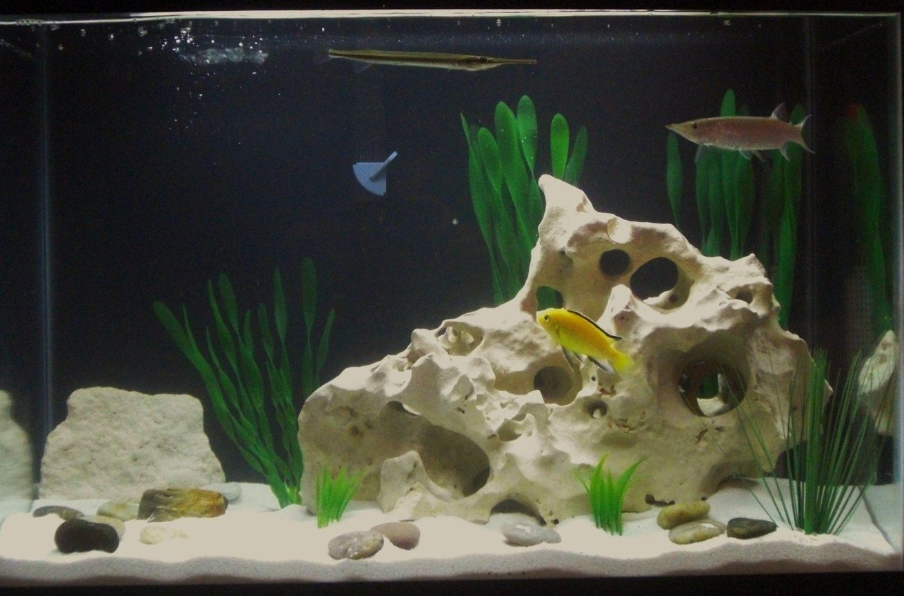 20 gallons freshwater fish tank (mostly fish and non-living decorations) - My 20gallon set-up
