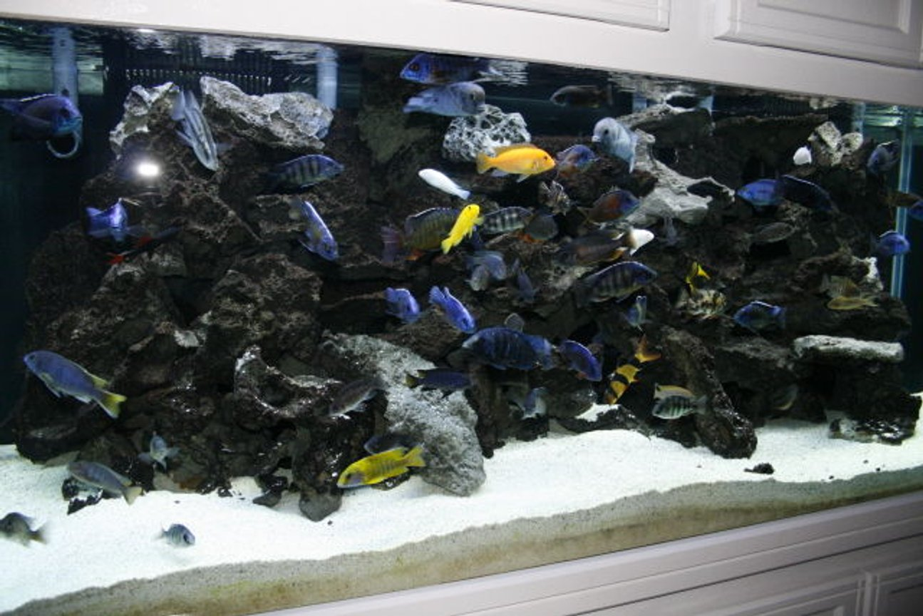 210 gallons freshwater fish tank (mostly fish and non-living decorations) - another tank view