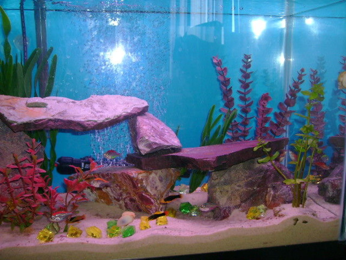 30 gallons freshwater fish tank (mostly fish and non-living decorations) - 30 g freshwater