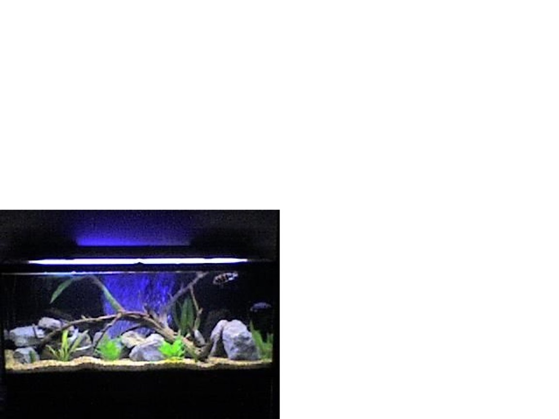 120 gallons freshwater fish tank (mostly fish and non-living decorations) - 120gal